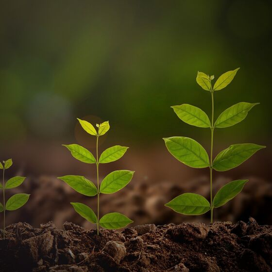 Driving a Growth-led Innovation Culture
