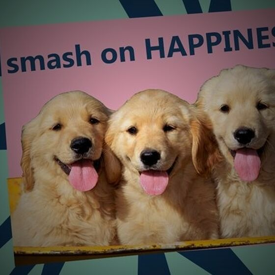 Happiness Hacks from smash
